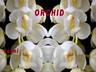 orchid.pps
